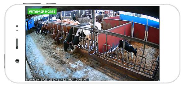 camerabewaking op de boerderij