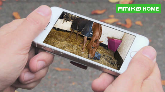 camerabewaking paardenstal